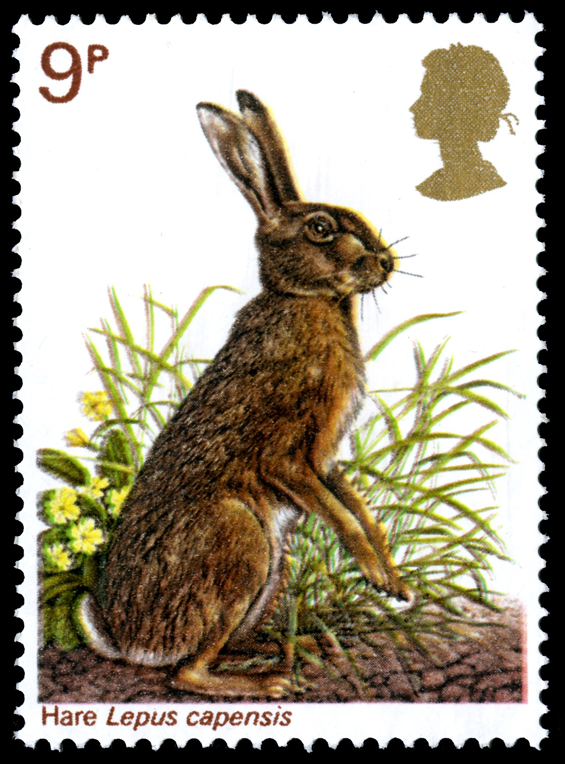 A standing brown hare on a 9 pence stamp.