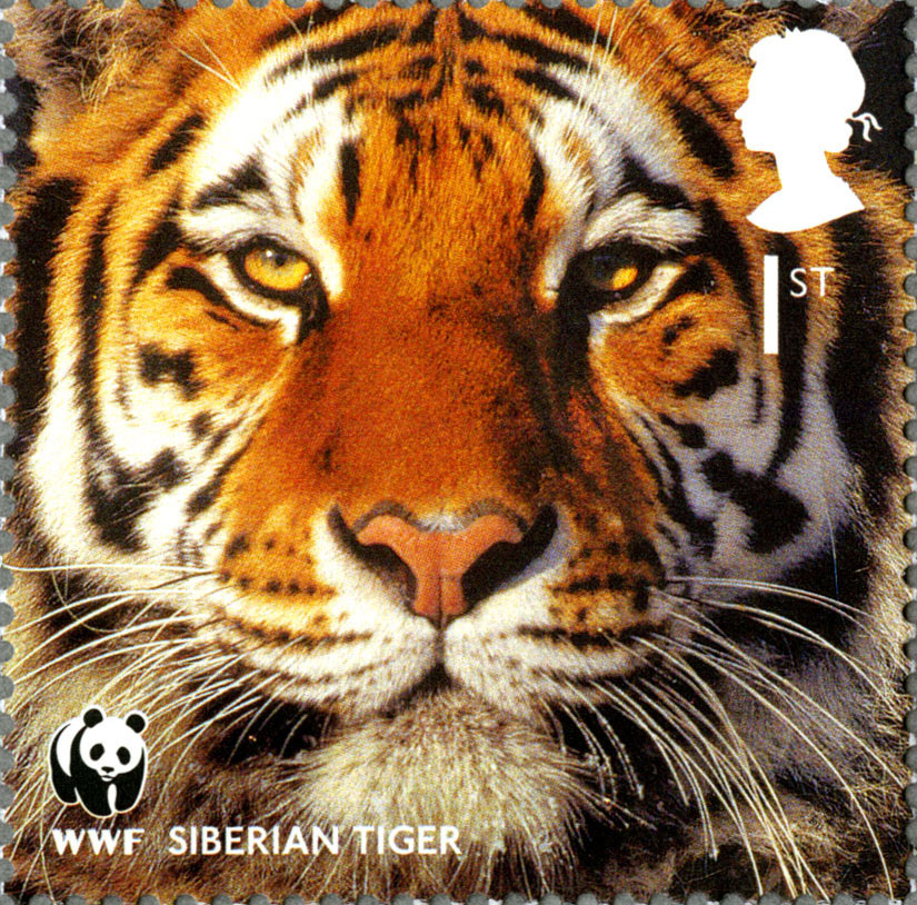 Stamp depicting the face of a Siberian Tiger.