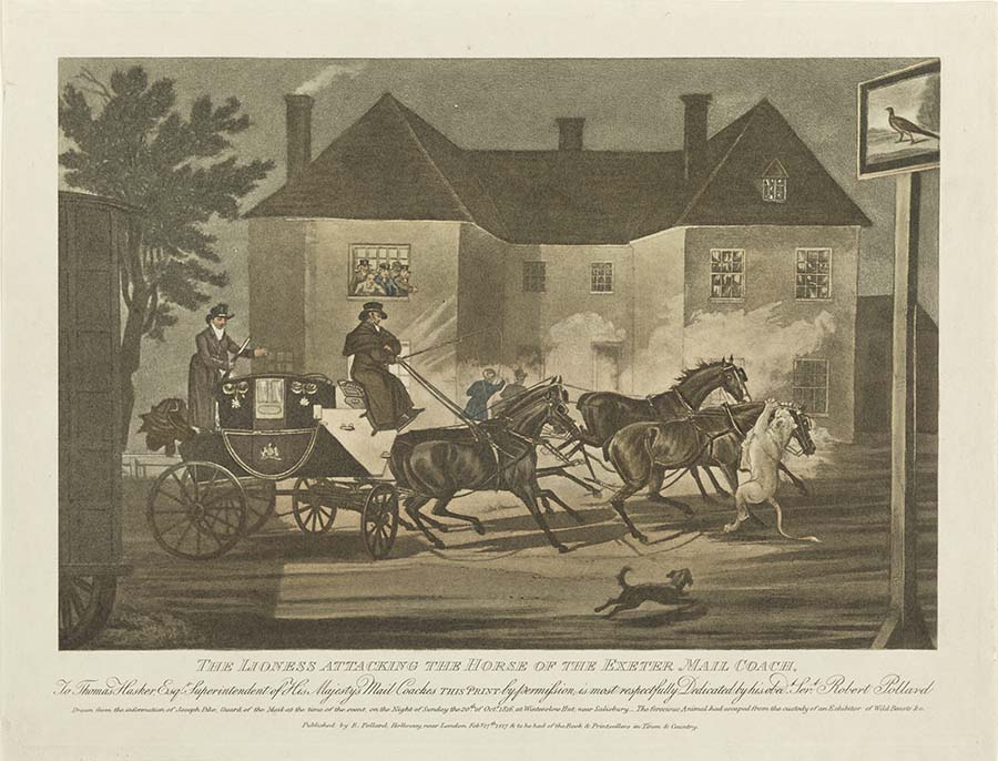 A coloured print of a lion attacking one of four horses drawing a mail coach with two drivers. In the background is a large house with people standing in the window. On the print, under the image is 'THE LIONESS ATTACKING THE HORSE OF EXETER MAIL COACH./ To Thomas Hasker Esq. Superintendent of His Majesty's Mail Coaches. This print by permission is most respectfully Dedicated by his obedt [sic]. Sert [sic]. Robert Pollard. Drawn from the information of Joseph Pike, Guard of the Mail at the time of the event, on the Night of Sunday the 20th of Oct 1816 at Winterslow Hut near Salisbury. The ferocious Animal had escaped from the custody of an Exhibitor of Wild Beasts &c.'. Under the image:'To be had of the Book & Printsellers in Town & Country'.